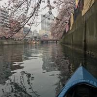 横浜の運河の環境問題を考える